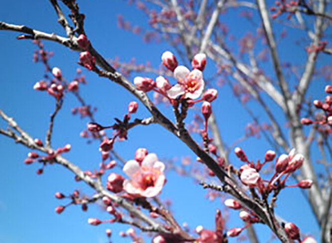 Grow and blossom