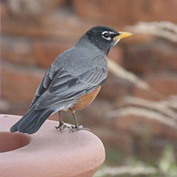 Robin balance