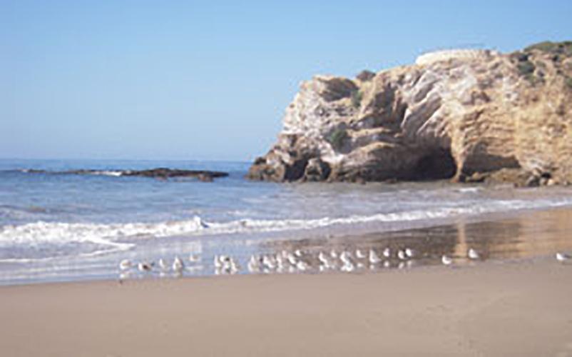 Beach tranquility birds