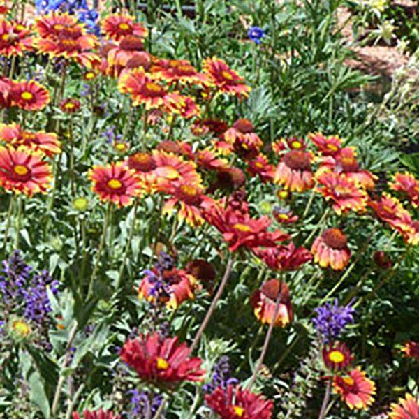 Serene summer garden