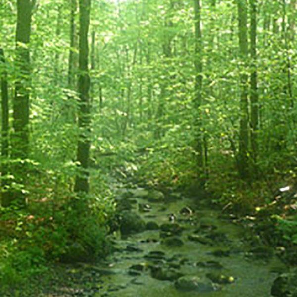0705emeraldforest