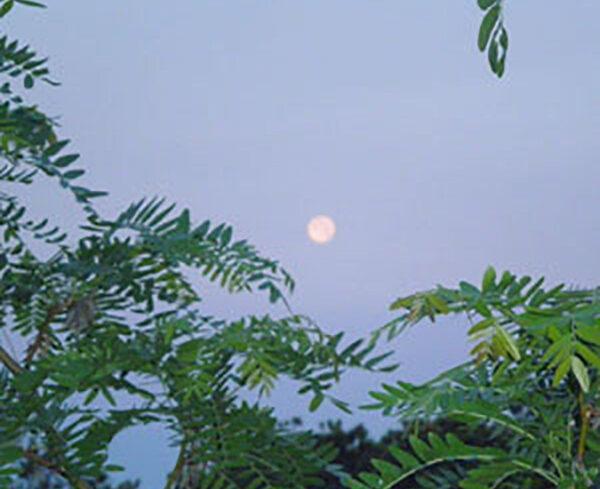 Full moon peace