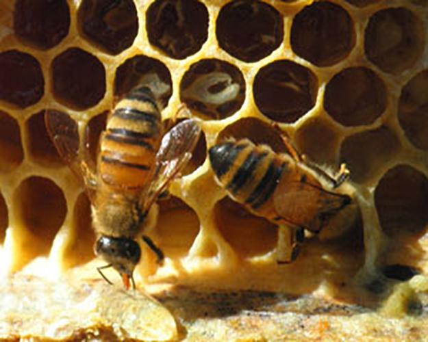 0729nectarofthebees