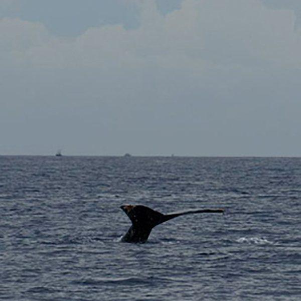 Wondrous whale tail