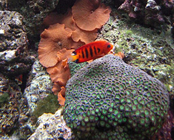 Wonder of sea life