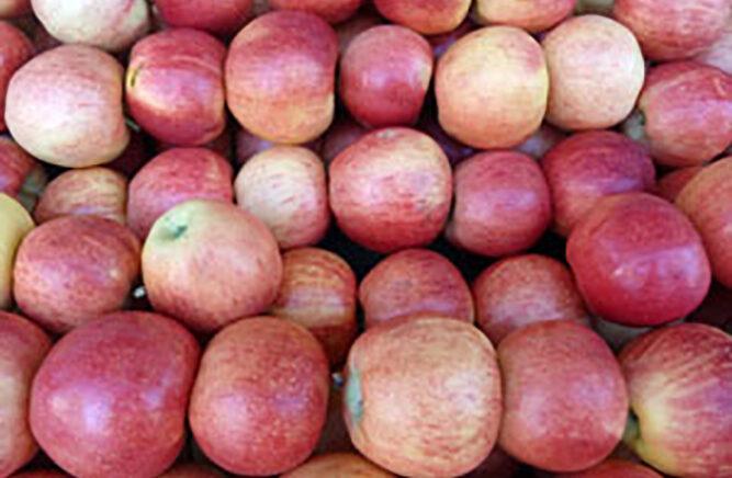Appreciate apples