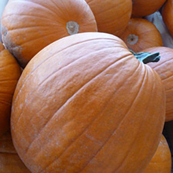 Abundance of Pumpkins