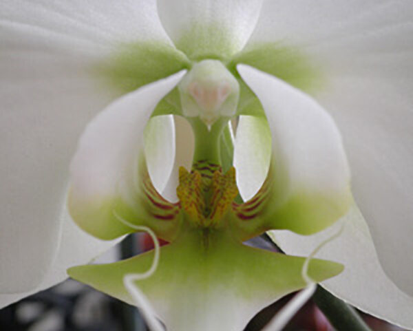 Beauty of an orchid
