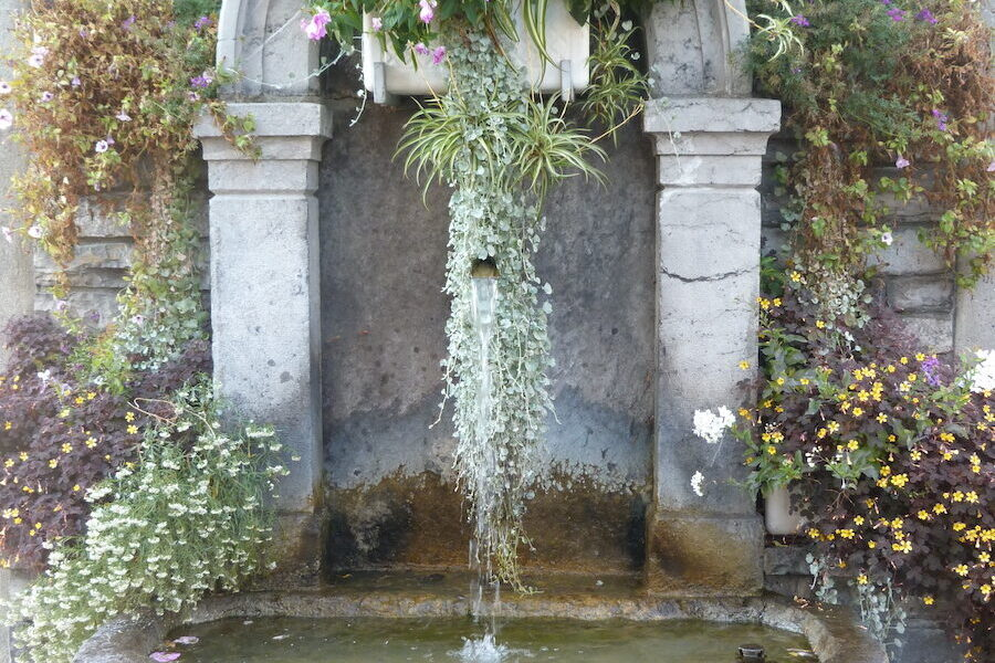 Appreciation of water and flowers