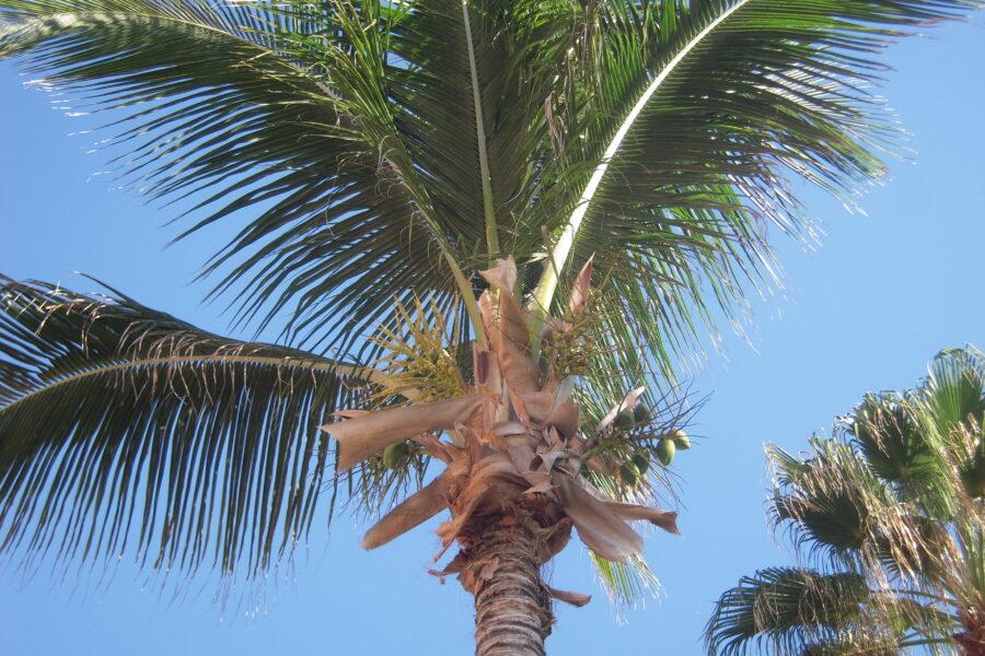 Enjoying Palm Tree Beauty
