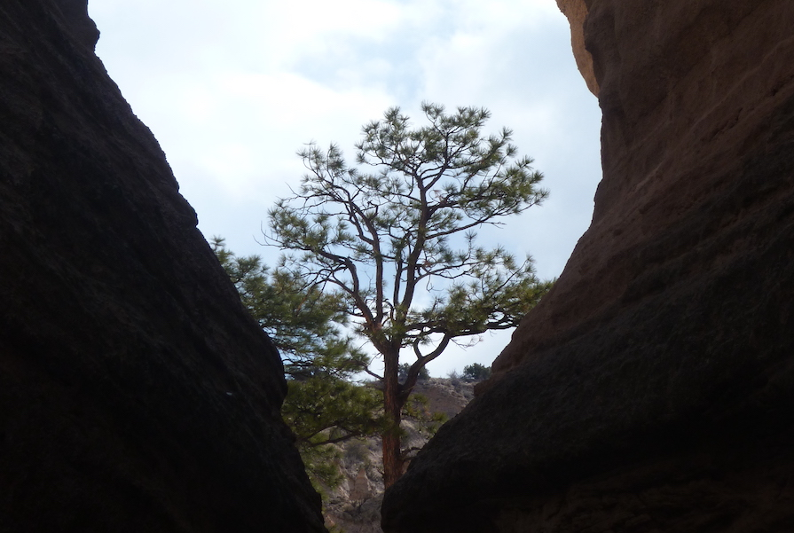 Grateful for the fortitude of a tree