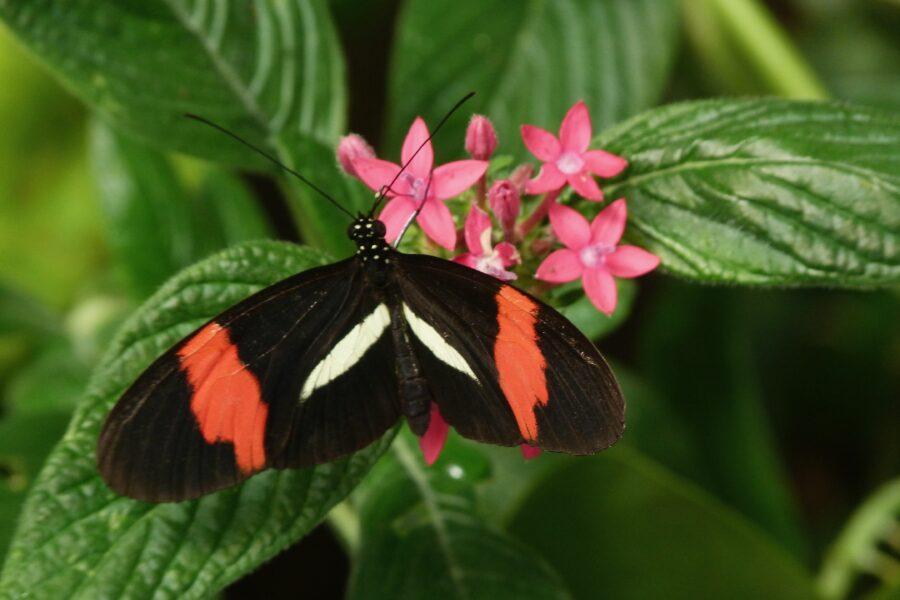 Butterflies represent transformation